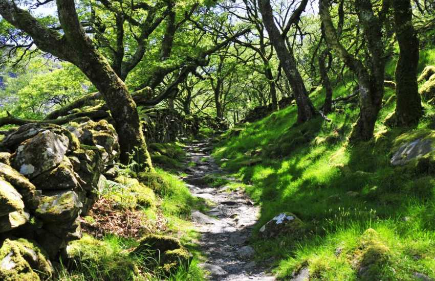 Cwm Bychan and the Roman Steps, a perfect beauty spot for a picnic
