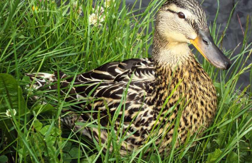 Cwm Bychan, fabulous for walking or birdwatching