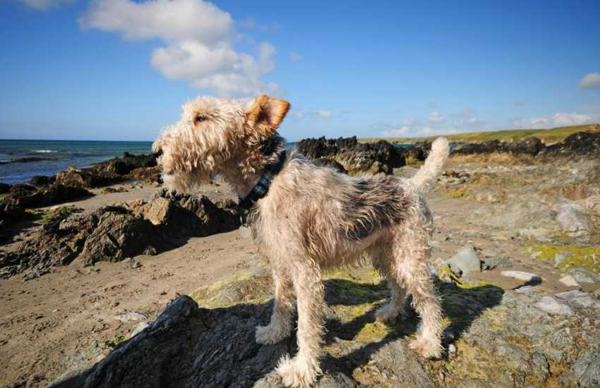 Its not just us who enjoy the fresh sea air! Many of our holiday cottages welcome dogs