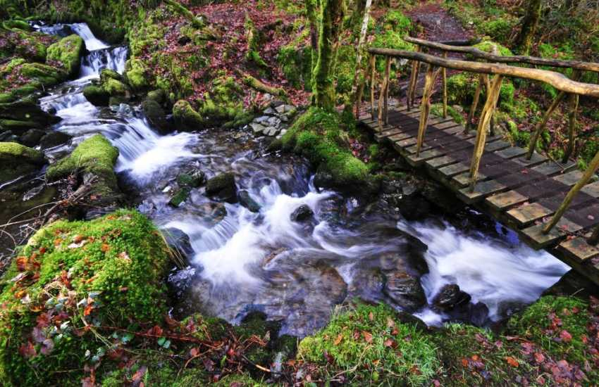 Discover the Alpine bridge, Chain bridge & Cavern cascade along the forest paths in the Hafod Estate