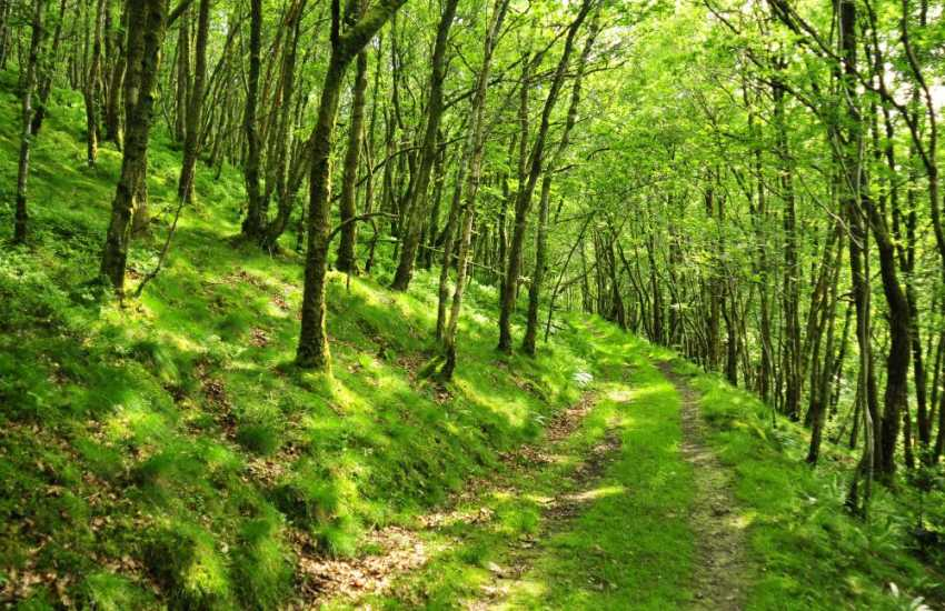 Woodland walks in the surrounding countryside
