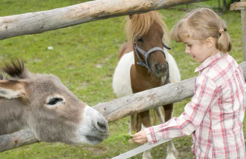 Scolton Manor Museum, The Dyfed Shire Horse Centre, Castle Henllys and Folly Farm are all within an easy drive for fun family days out