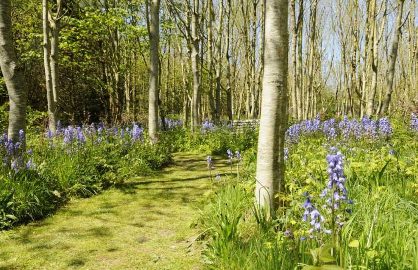 Bluebells in spring at Hilton Court - 12 acres of lush gardens to explore plus galleries, gift shops and a tea room
