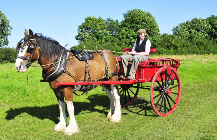The Dyfed Shire Horse Farm - enjoy harnessing demonstrations, tractor rides, animal feeding, donkey grooming and egg collecting