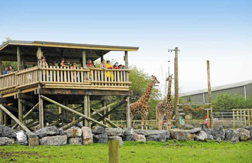 Day out at Folly Farm zoo is a must for all the family