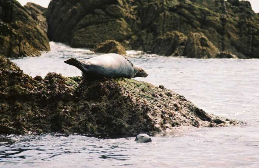 Enjoy an exciting 'Seal Safari' out to spot Atlantic Greys lounging on the rocks along this wild Welsh coastline