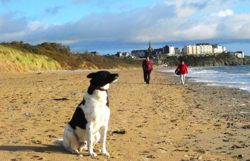 Many of our Quality Cottages welcome dogs - 'Vinney' on Tenby's glorious South Beach