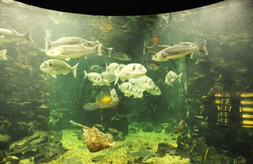 Sea Zoo Wales' largest marine aquarium with over 150 species in carefully recreated coastline