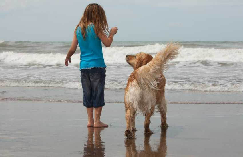 Enjoying the beach! Many of our holiday cottages welcome dogs