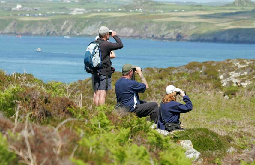 The Pembrokeshire Coast National Park and offshore Islands of Skomer, Skokholm, Ramsey and Grassholm  is a spectacular place for bird watching