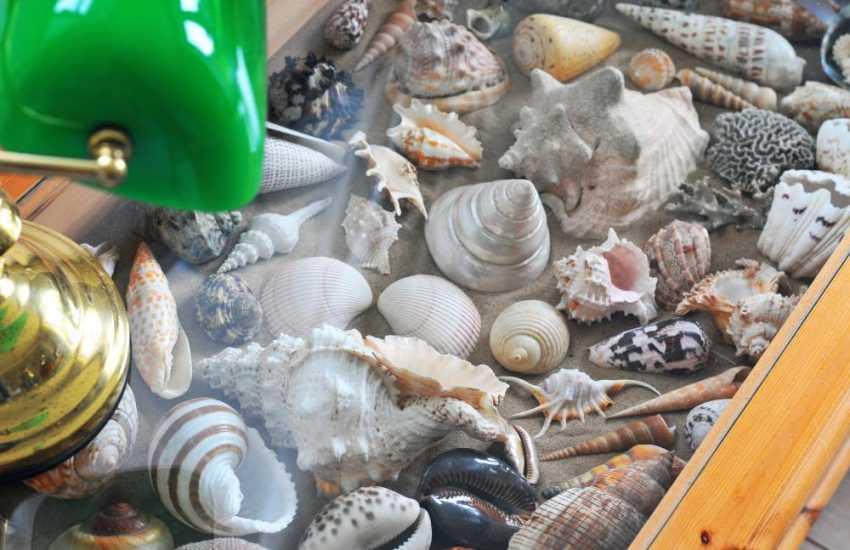 Lleyn holiday cottage - shells
