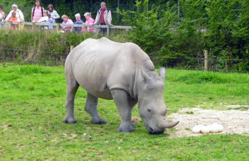 Folly Farm, Heatherton and the Rhinos at Anna,s Wild Welsh Zoo are just some of the family attractions within a short drive
