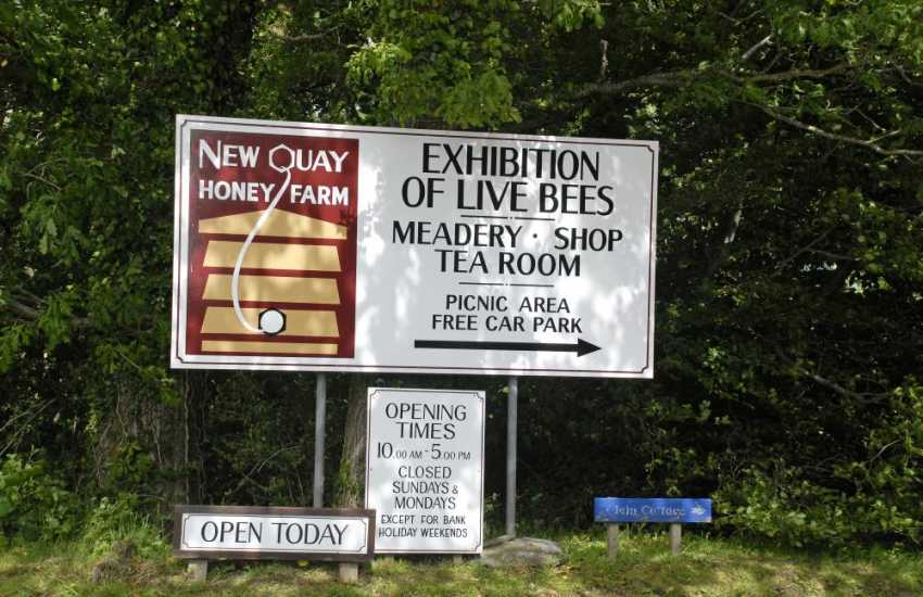 Do visit New Quay Honey Farm for a fascinating insight into the life of a bee. Delicious honey and meade are for sale in the cafe