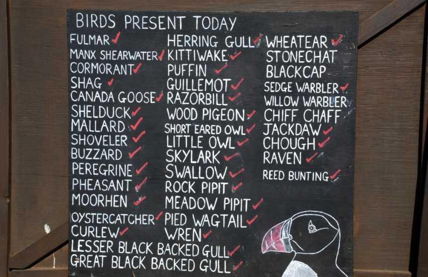 Skomer Island and the Pembrokeshire coastline - fantastic for bird watching