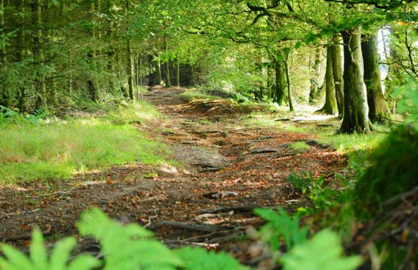 Walking in the Kerry Forest, Clun Forest or along Offa's Dyke