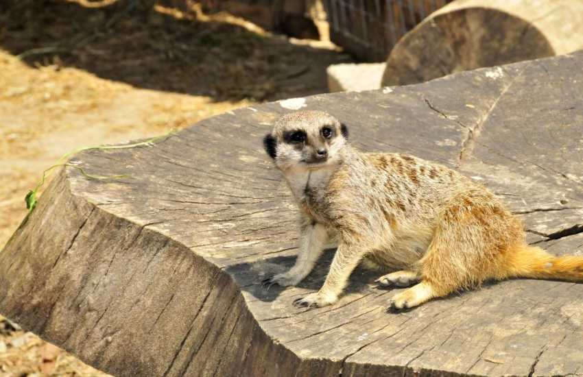 Heatherton Sports Park, Tenby Dinosaur Park, Oakwood and Anna's Wild Welsh Zoo for family days out are all within an easy drive