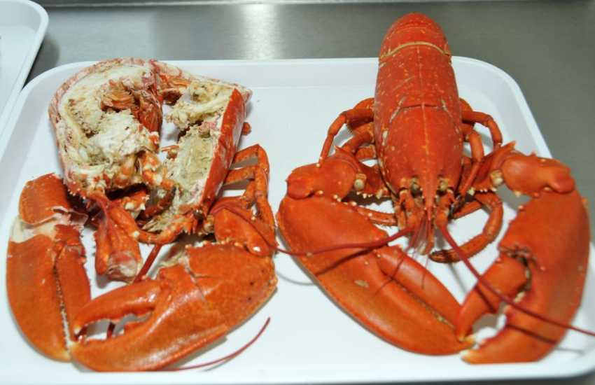 Delicious freshly caught lobster is available in Upper Solva near Bay View Stores