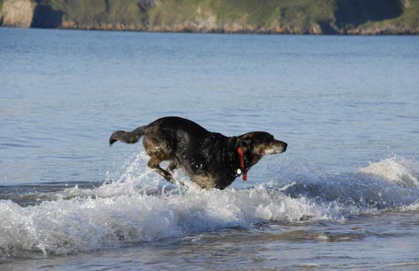 Enjoying the waves - most Quality Cottages welcome dogs