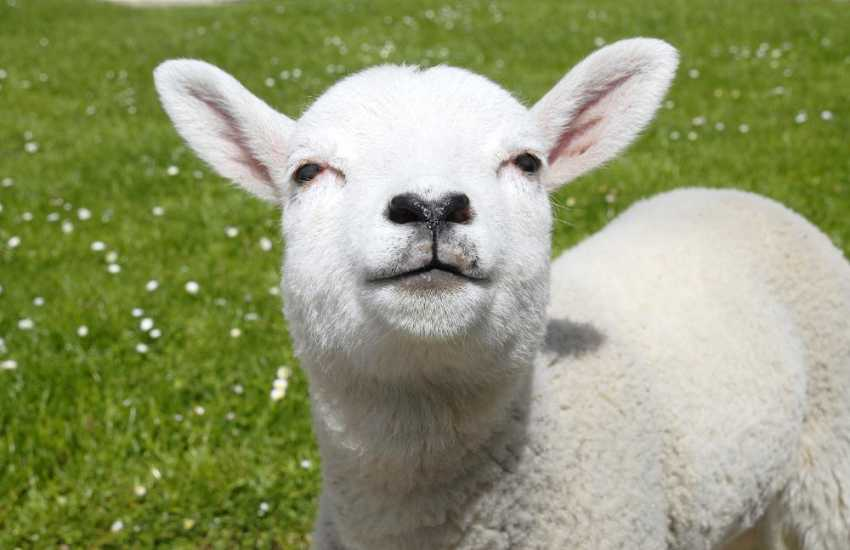 Pembrokeshire farm holiday cottage - see the lambs during the spring