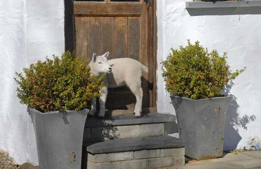 Farm holidays in North Pembrokeshire