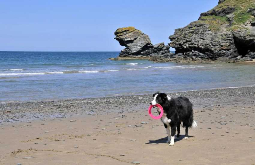 On the beach at Llangrannog - Many of our cottages welcome dogs