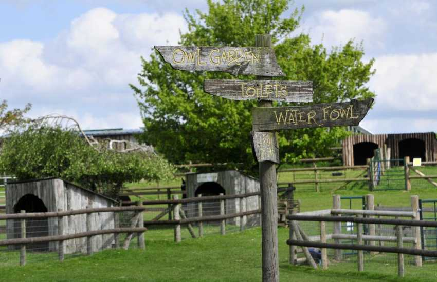 Explore the Owl Centre and small breeds farm at Kington