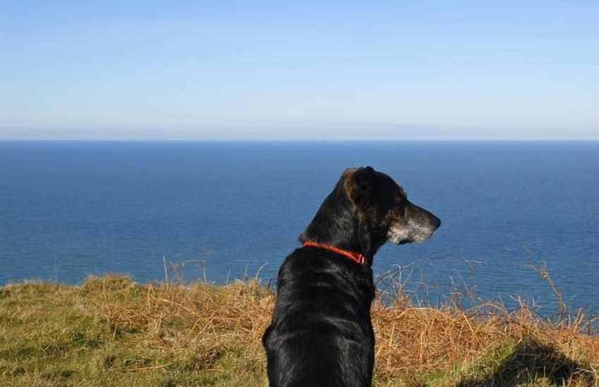 Enjoy the Pembrokeshire Coast Path for spectacular scenery - Many of our cottages welcomes your dogs