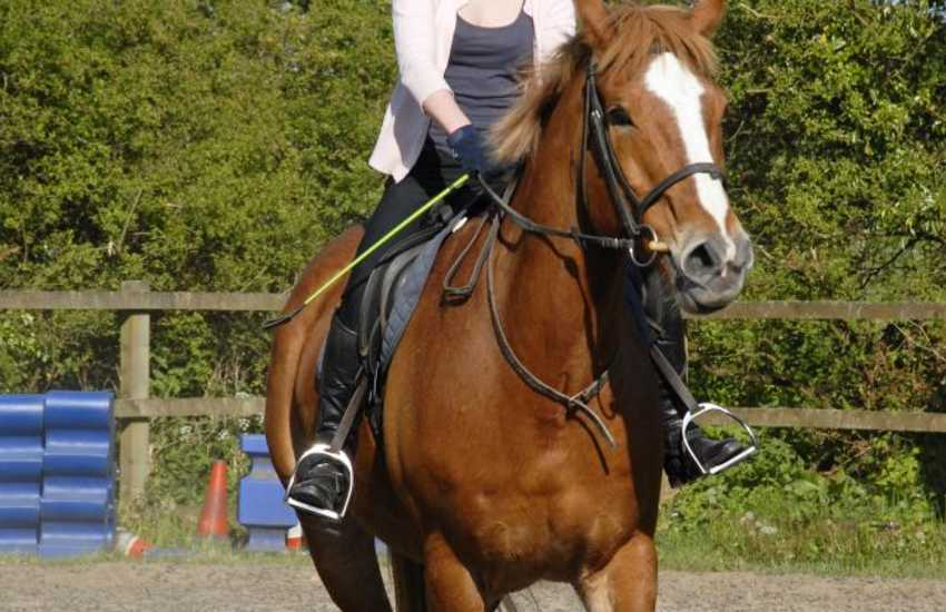 Marros Riding Centre offer horse riding for everyone. From treks through ancient woodland, beach rides or even 'own a pony' for the day!