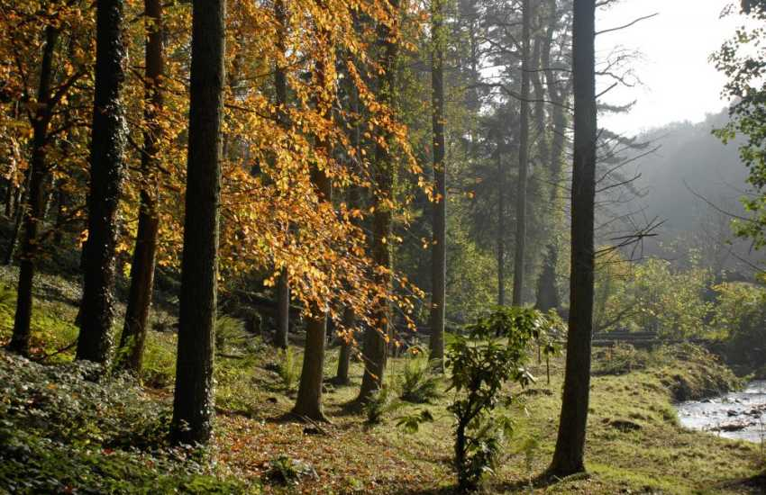Enjoy autumn walks in Canaston Woods, Picton Castle, Scolton Manor, and Colby Woodland Gardens (NT)