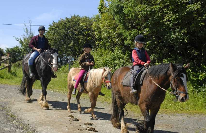 Crosswell Horse Agency offer treks up in the Preselli hills and ancient bridleways plus Own a Pony Days for children