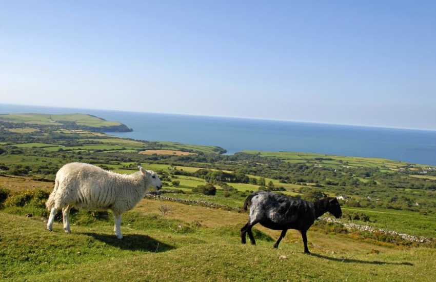 Enjoy long walks on the Pembrokeshire Coast Path or up on Carn Ingli common where the views are breathtaking