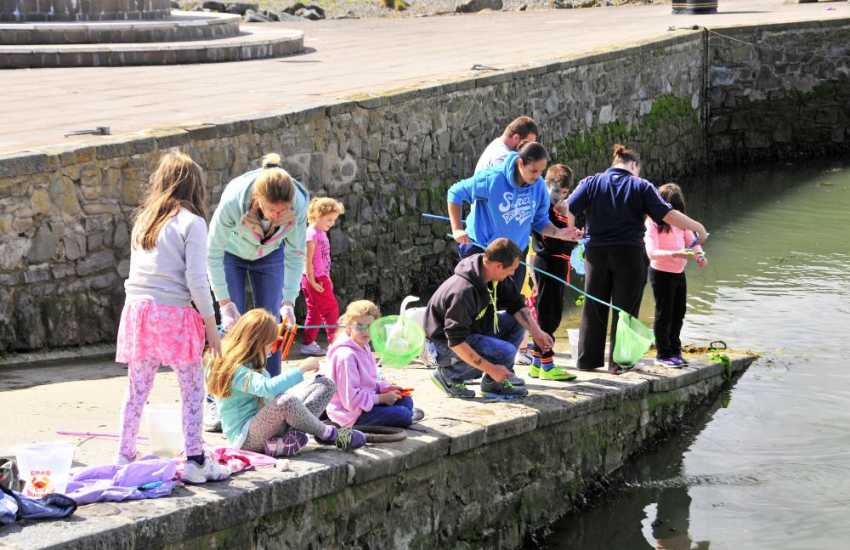 Crabbing off Aberaeron harbour wall - great fun for all the family!