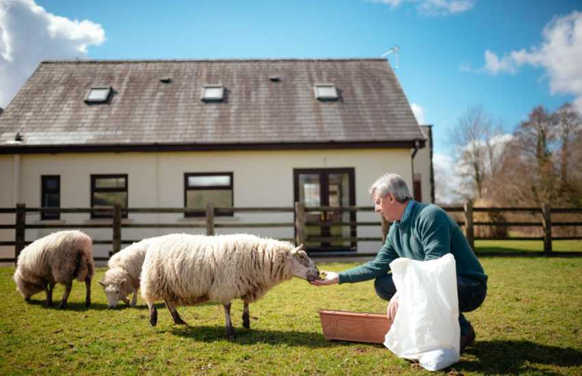 The friendly host will show the ones how to feed the sheep