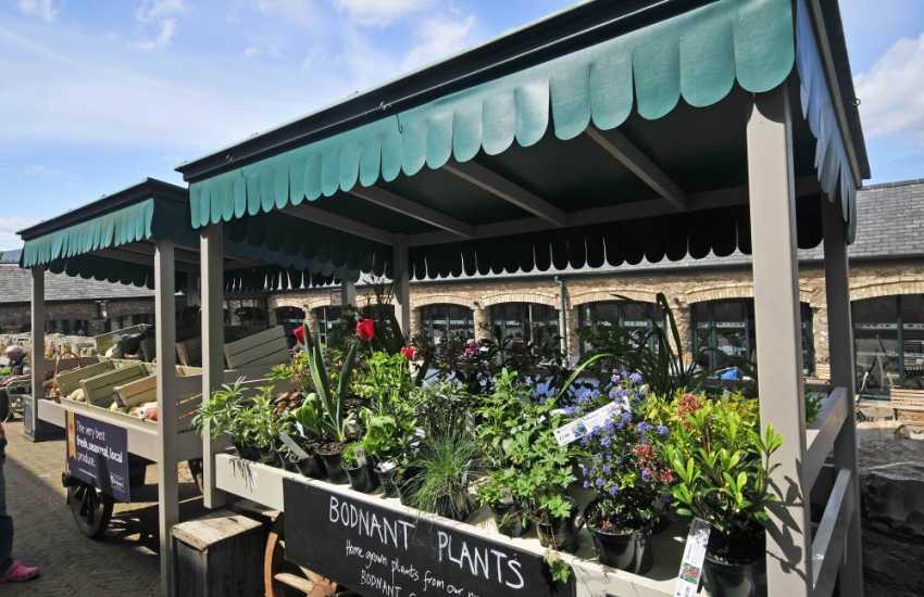 Bodnant plants for sale Welsh food centre