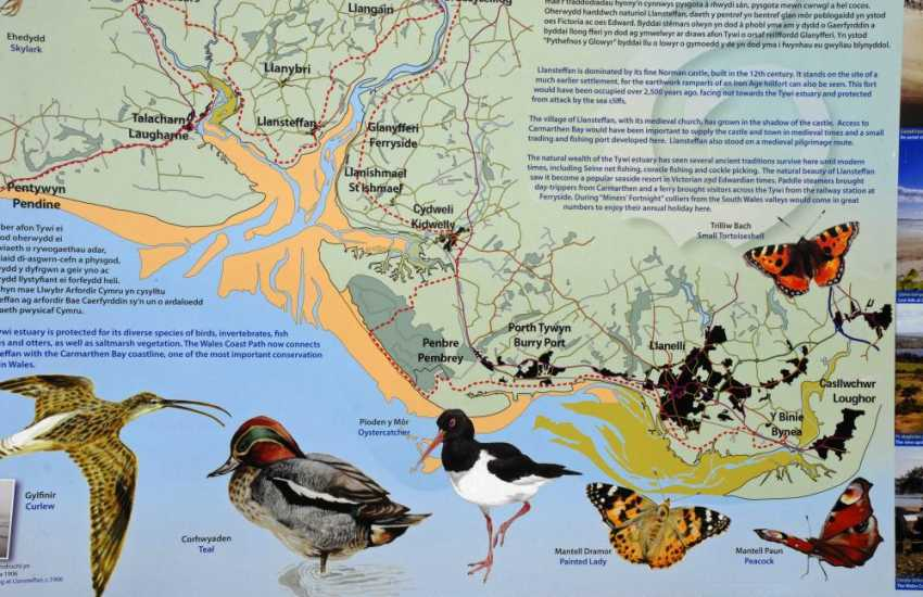 The Tywi estuary is home to a wide variety of waders and wildfowl plus herons, ravens, peregrines and kestrels