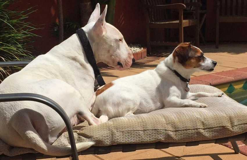 Most Quality Cottages welcome dogs - chilling out together!