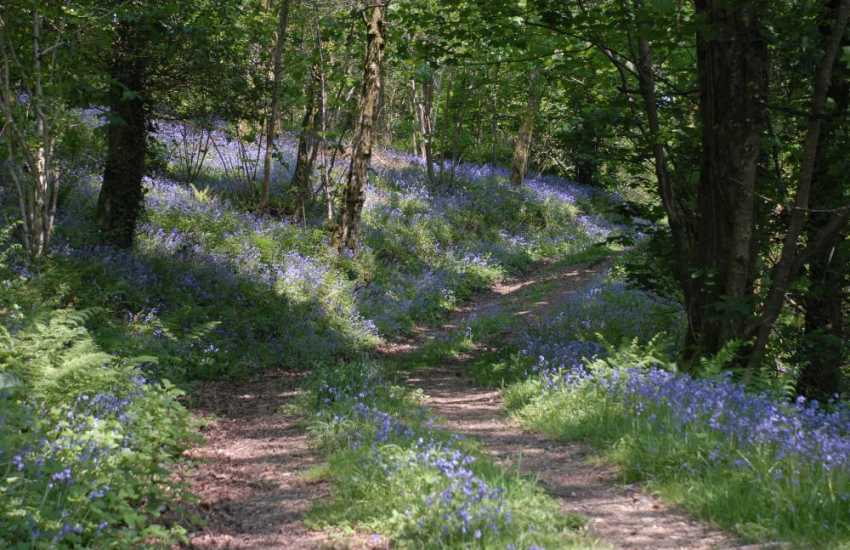 Carmarthenshire holiday cottage with acres of woodlands to explore