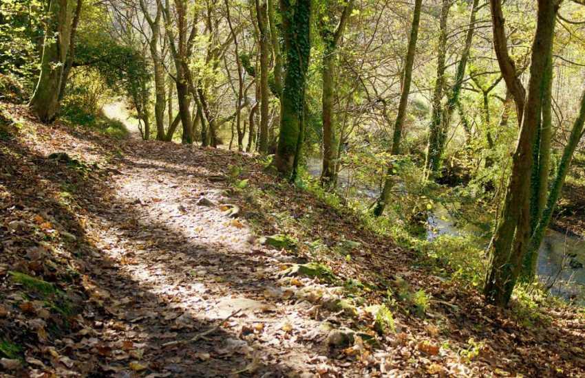 Incredibly beautiful woodland walk to the sandy beach of Three CliffsBay