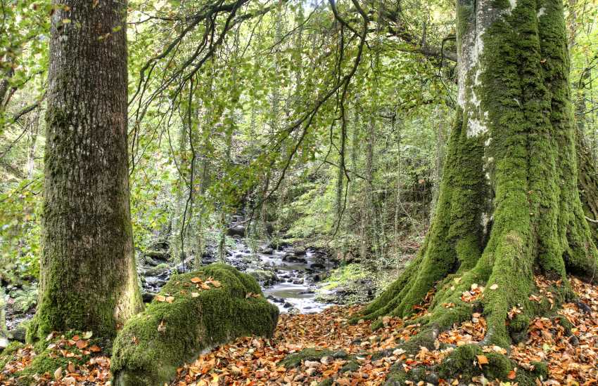 Shaded by trees, the Torrent walk near Dolgellau is ideal for damp, drizzly days, especially after rain, when the river is full and the falls look lovely