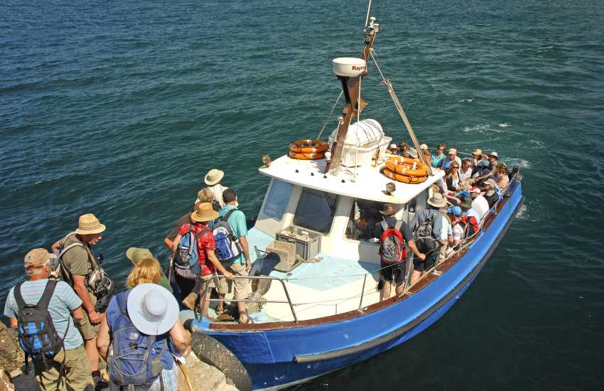 Board the 'Dale Princess' and take a 20 minute boat trip from Martins Haven over to Skomer Island