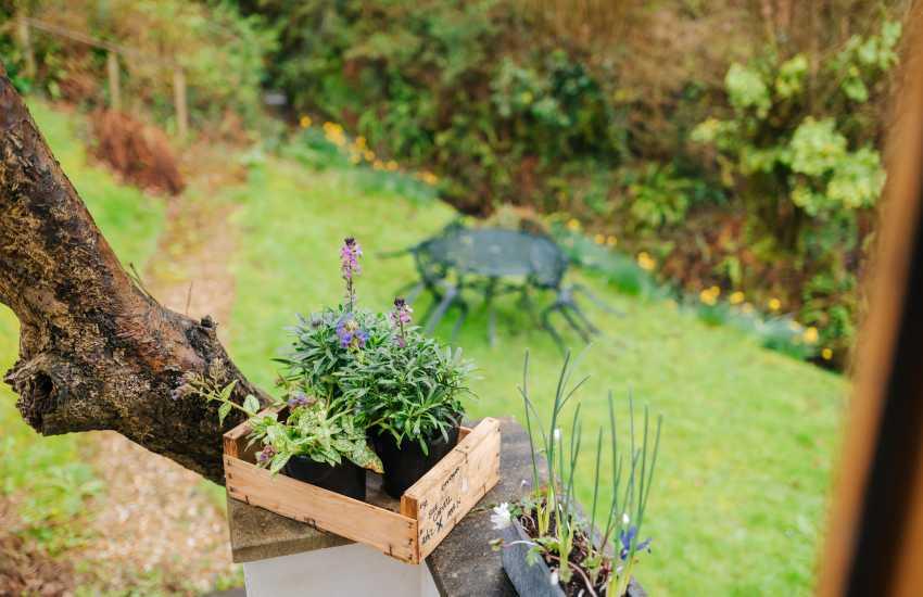 Cosy cottage near Brecon Beacon - garden