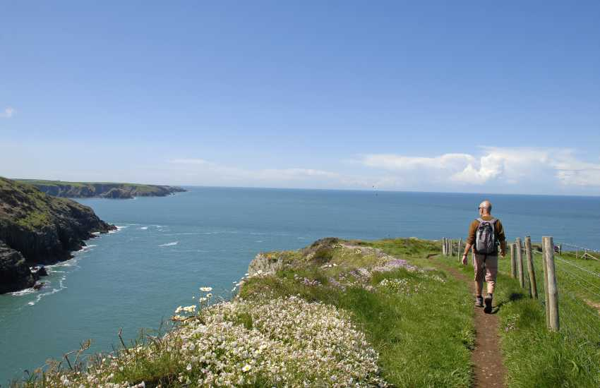 Walk The Pembrokeshire Coast Path for wonderful coastal scenery, flora and fauna throughout the year