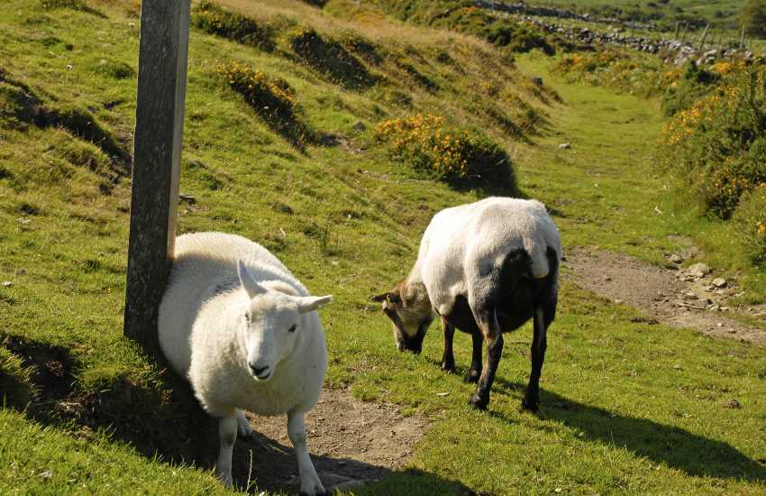 Head up into the Preselli Hills for some lovely moorland walking where wild ponies and Welsh sheep roam freely