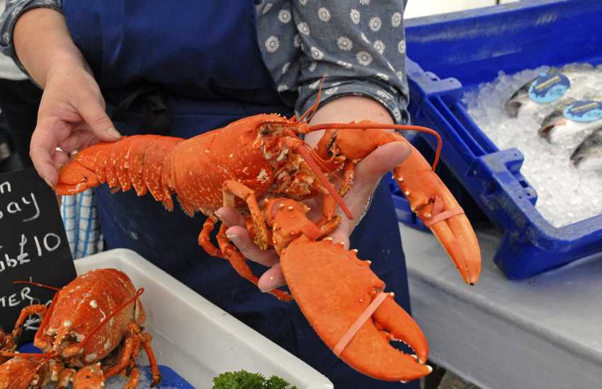 Lobster and crab from 'Something Fishy' in Upper Solva. Treat yourselves to a seafood feast