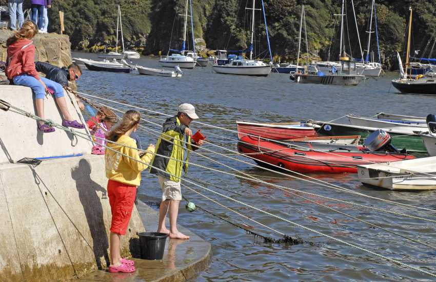 Solva harbour wall is a great spot to go crabbing at high tide