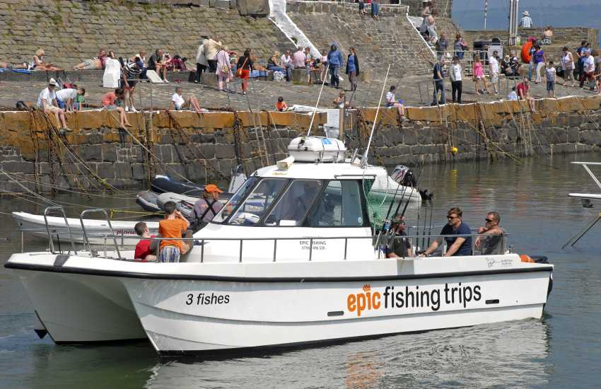 Dolphin spotting excursions and fishing trips both run from New Quay's harbour