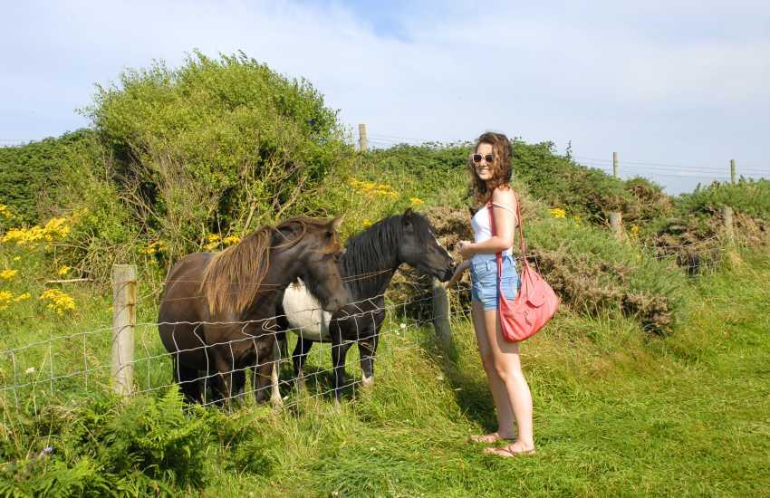 Visit Cardigan Island Coastal Farm Park with friendly farm animals - a fun family day out