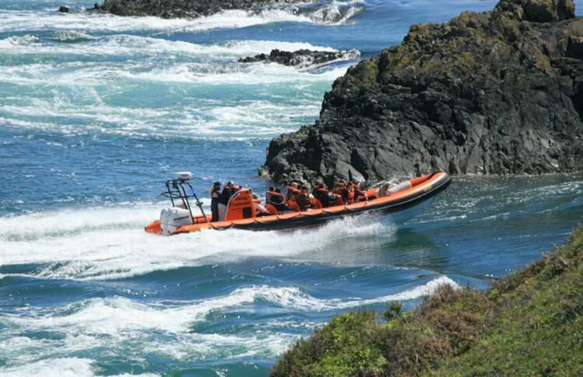 Enjoy an exhilarating boat ride out to explore the caves and gorges of Ramsey Island (RSPB)