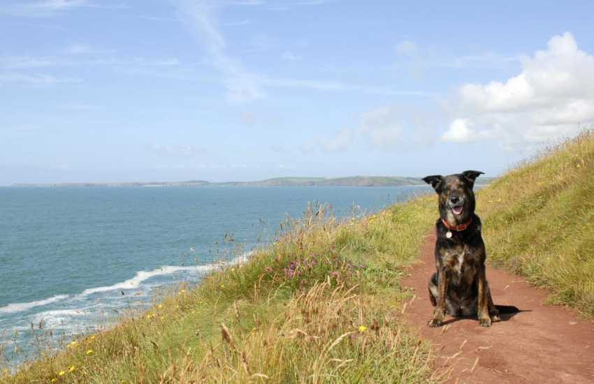 Out on the Pembrokeshire Coast Path - many of our holiday cottages welcome dogs