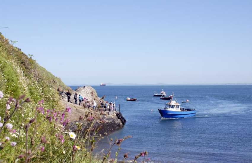 A short 10 minute boat ride from Martins Haven will take you to Skomer Island